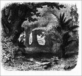 La selva de Petén