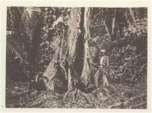 """Fotografía de los alrededores del sitio de Quiriguá, ejemplificaba la espesura de la selva circundante. """"Es muy raro que exploradores o cazadores penetren solos al interior de estos bosques espesos, cuya lujuriante vegetación oculta probablemente muchas reliquias no conocidas de la antigua arquitectura india."""""""