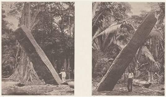 """""""Los llanos del bosque, donde han sido encontrados los monumentos de Quiriguá, se levantan sólo a unos cuantos pies sobre el nivel ordinario del río Motagua. En las épocas de creciente, el río se desborda sobre el bosque. También el lugar de las ruinas parece haber sido frecuentemente inundado, como lo indica la humedad y lo pantanoso del terreno, así como la posición de varios de los monumentos. Además, es notorio que la última inundación de octubre de 1852, llegó hasta aquí, y que la mayor parte de las ruinas quedaron bajo el agua. A consecuencia de esto, varios de los ídolos que originalmente se encontraban en posición vertical, en esta época amenazaban caerse al suelo""""."""