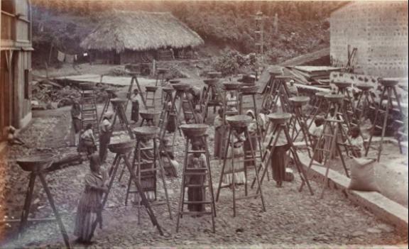 Cosechadoras de café, finca Las Nubes. (Fotografía de Muybridge, 1875).